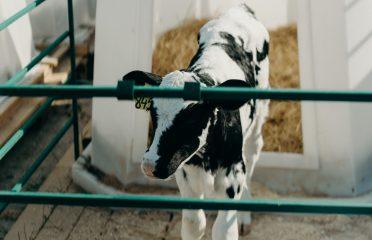 Balaji Milk Foods Pvt. Ltd.